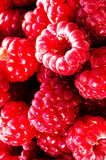 Heap of Fresh Red Ripe raspberry over white background macro Royalty Free Stock Images