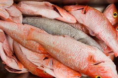 A heap of fresh red snapper in the tropics Stock Photo