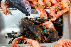 Heap of fresh  seafoods. And fish at kitchen Royalty Free Stock Photography