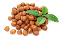 Heap of fresh shelled hazelnuts with green leaves. Royalty Free Stock Photo