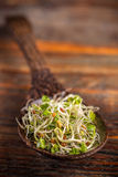 Heap of fresh sprouts Royalty Free Stock Image