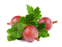 Heap of Fresh Sweet Gooseberries with Leaves. On White Background Stock Photography