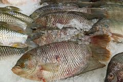 Heap of Fresh Tilapia Fishes on Ice at the Market. Texture background stock photo