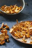 Forest mushrooms chanterelle Royalty Free Stock Image
