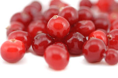 The heap of fresh wet cranberry. White background Stock Photography
