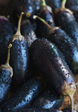 Heap of fresh wet eggplants with dew. Heap of fresh wet eggplants with dew, close up Stock Images