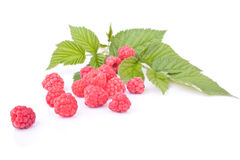 The heap of freshly collected raspberries Royalty Free Stock Image