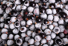 Heap of frozen black currant as background Royalty Free Stock Images
