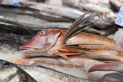 Heap of frozen fish for sale at a market stall, La Stock Image