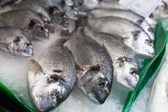 Heap of frozen sea beam fishes for sale at a Stock Photos