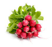 Heap of a garden radish Royalty Free Stock Image