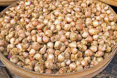 A heap of garlic on the market in Java Indonesia. Asia Royalty Free Stock Photography