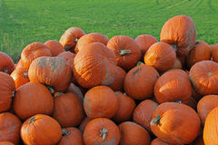 Heap of gourd pumpkins in the grass Stock Image