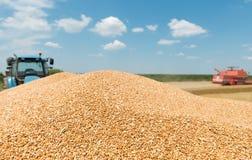 Heap grain wheat Stock Image