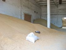 Heap of grains of barley and wheat in stock stock photos