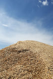 Heap of grains of oats against the blue sky Stock Photography