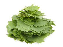Heap of grape leaves Stock Photos