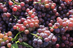 A heap of grapes Royalty Free Stock Photography