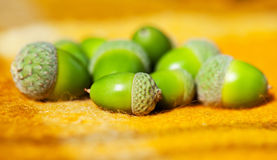 Heap of green acorns on warm yellow woolen rug Royalty Free Stock Photo