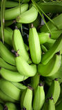 A heap of green bananas. Photo at Asia Royalty Free Stock Photography