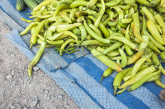 Heap of Green Chili Pepper Stock Images