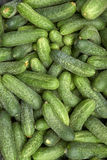 Heap of green cucumbers. Fragment of a pile of fresh green cucumbers appetizing Royalty Free Stock Photo