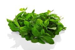 Heap of green fresh spearmint with water drops Stock Images