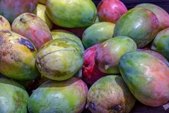 A heap of green mangoes royalty free stock photo
