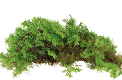 Heap of green moss Stock Photos
