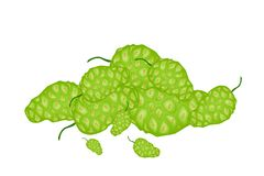 A Heap of Green Noni or Morinda Fruits Royalty Free Stock Photography