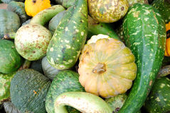 Heap of green pumpkins Royalty Free Stock Images