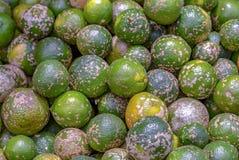 A heap of green rangpur. stock photos
