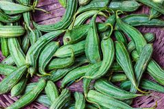 Heap of green ridge gourd jhinga in retail vegetable super market for sale.  royalty free stock images