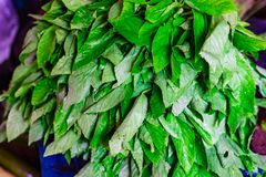 Heap of green spinach leaves in retail vegetable super market for sale.  stock image
