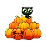 Heap of Halloween Pumpkins with a Black Cat on it Stock Photography