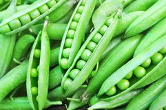 Heap of fresh harvested green peas on pods background, selective focus royalty free stock photos