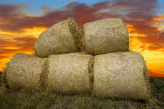 Heap of hay bales Stock Images