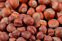 Heap of hazelnuts Stock Photo