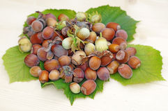 Heap of hazelnuts on leaves close up on a light wood Stock Image