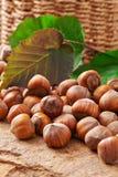 Heap of hazelnuts Stock Image