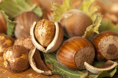 Heap of hazelnuts. On wooden table Stock Photography