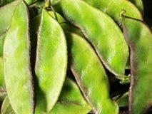 Heap of indian beans stock photos