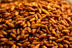 Heap Of Larva For Sale Stock Photo