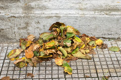 Heap of leaves Stock Photo