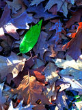 Heap of leaves in autumn Royalty Free Stock Photo