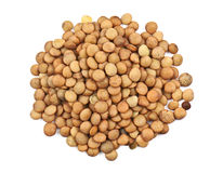 Heap of lentil Royalty Free Stock Photos