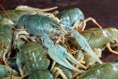 Heap live crayfish Stock Photos