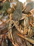 Heap of live crayfish Stock Photo