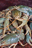 Heap live crayfish Stock Photo