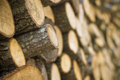 Heap of log arranged in order Stock Photo